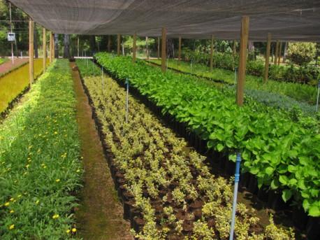 Villarrica online viveros for Viveros en curico